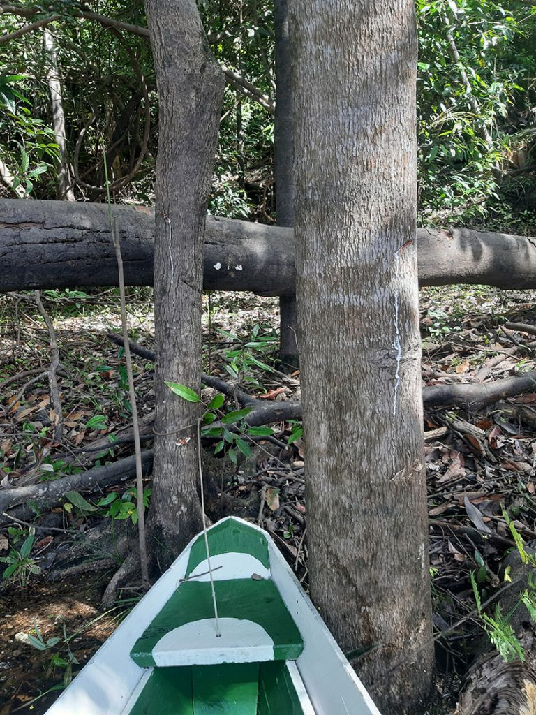 Canoeing | Amazonas Eco Lodge