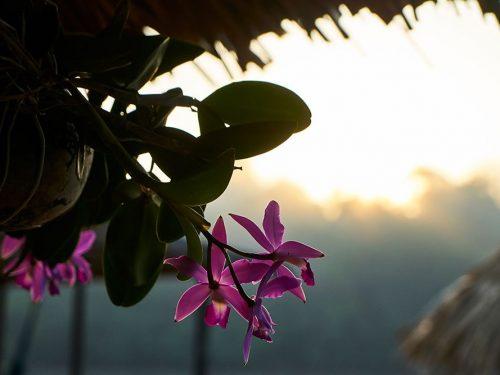 Flowers_1000x667