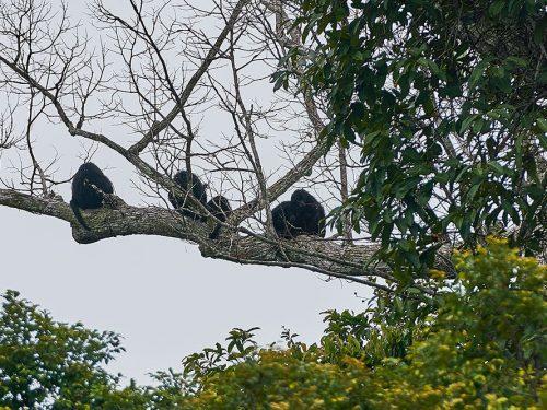 Monkeys_1000x667
